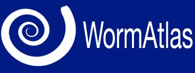 WormAtlas logo