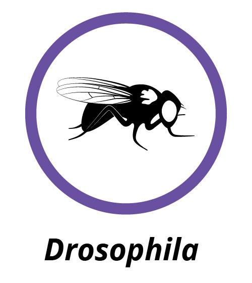Drosophila icon