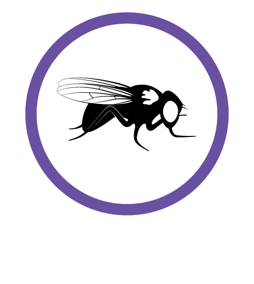 Drosophila icon