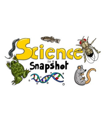 Illustrated logo for Science in a Snapshot. Yellow and black bubble text are surrounded by drawings of a DNA strand, mouse, fly, fish, worm, and frog